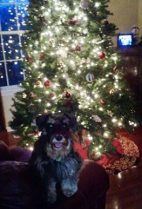 Lexi in front of tree