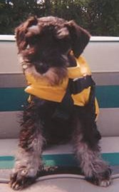 Me on my boat in the horrid yellow vest. Don't I look like a bumblebee?