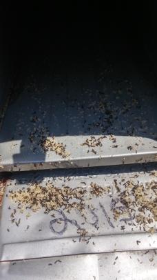 mailbox ants