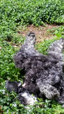 Ahhh, rolling around in the English ivy feels so good.