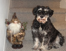 Mom says her grandma's stairs were the most photographed in the world because that's where she had so many pictures taken. I think that must be why she poses me on our stairs. That's Father Christmas next to me. Later, I chewed him up.