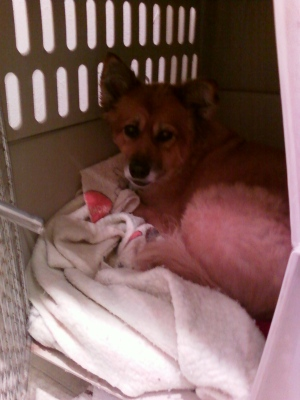 Lily in my kennel