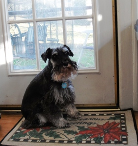 I would go out the back door into the great big fenced yard. My screen house was out there too, and I could duck under the screening if I wanted to be inside it.