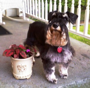 Mommy planted flowers in pots and made the porch pretty.