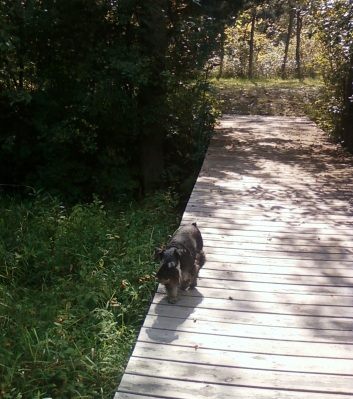 I enjoyed walking down to the river at the B&B. I love all the new smells.