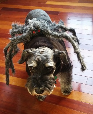 Spider Dog? More like attacked by a spider!