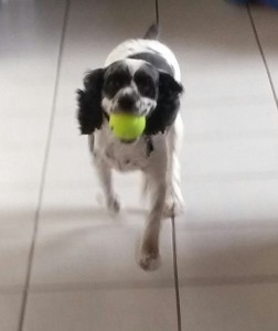 Bogie had a ball!
