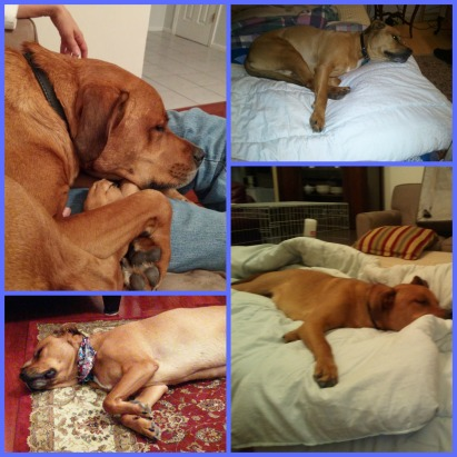 Riley napping Collage