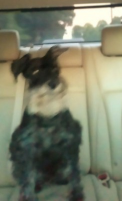 I'm a good boy riding in the car.