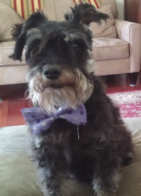 piper-with-bowtie