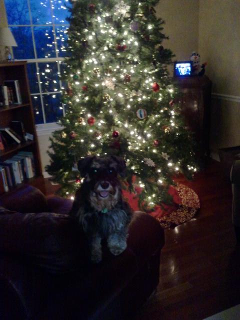 Christmas tree-Lexi