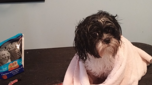 gracie-towel-dry-with-treat-2