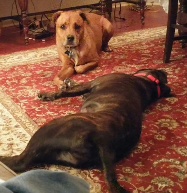 riley-lucy-resting-from-play