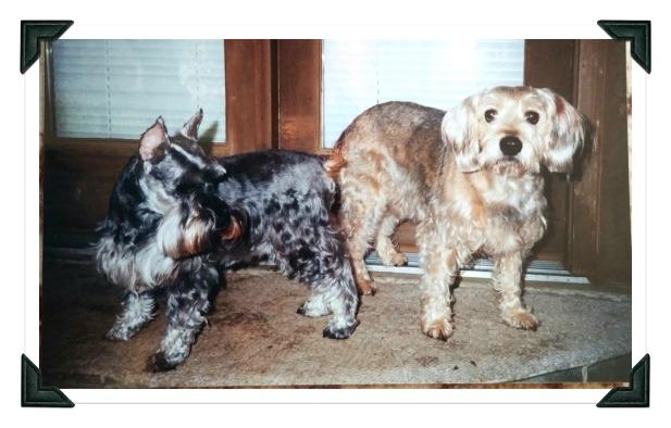 Freda (11) Sammy (10) April 14 2001 edited