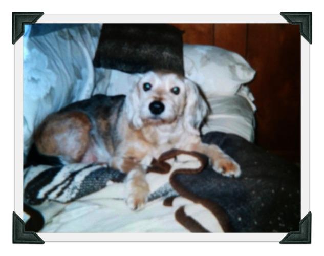 Sammy 11 yrs old winter 2001-2002 edited