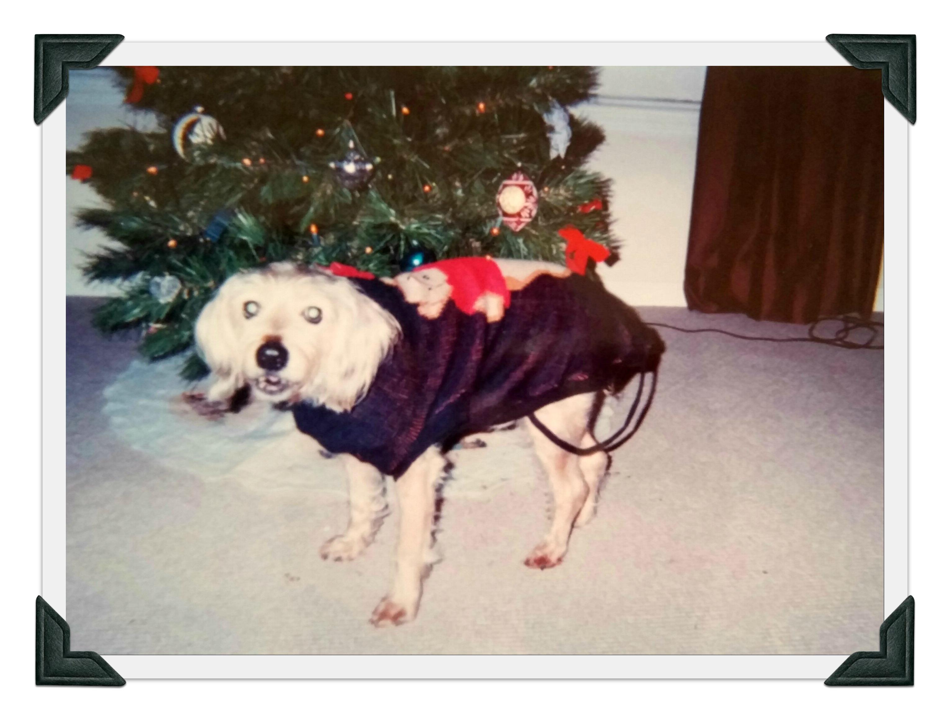 Sammy Christmas 2002 edited 2