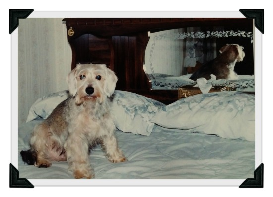 Sammy Dec 1999 edited