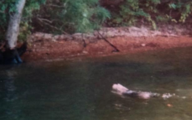 Sammy swim to shore edited