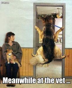 dog in doorway at vet