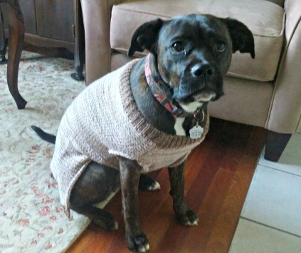 Lucy in sweater Dec 2017